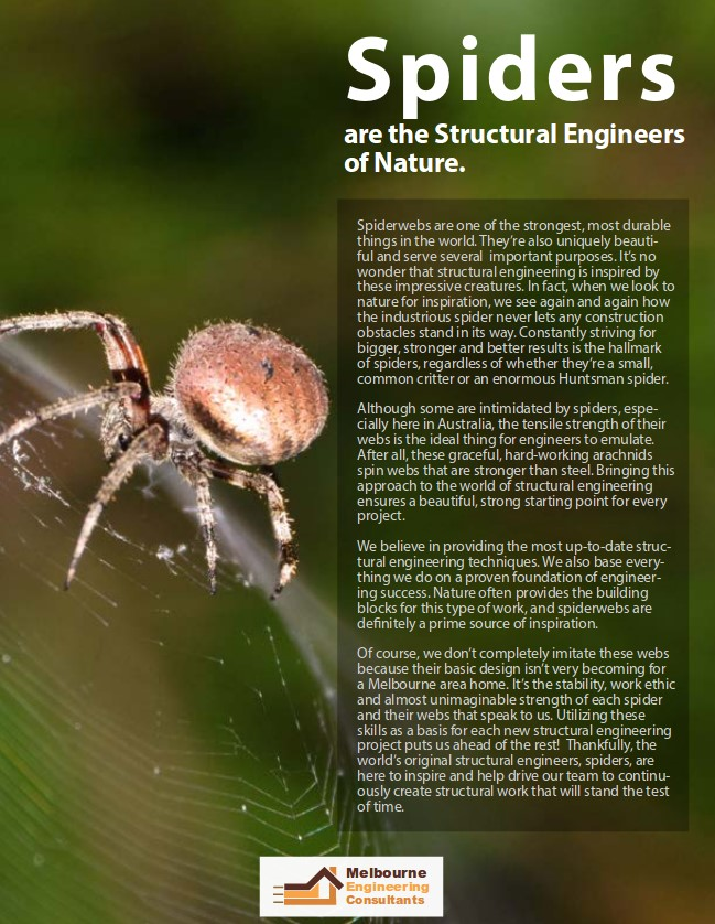 Spiders are the Structural Engineers of Nature