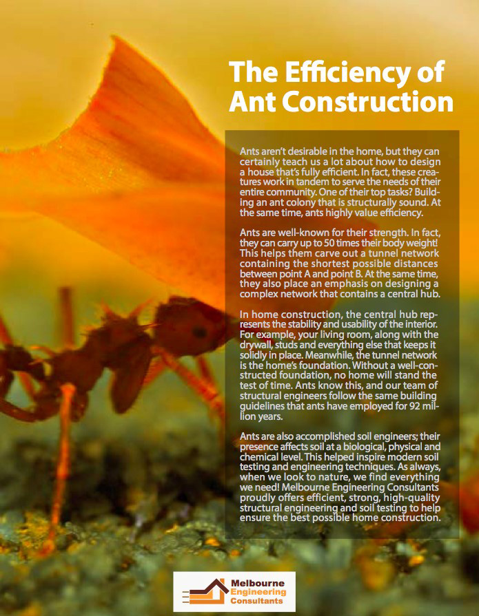 The Efficiency of Ant construction